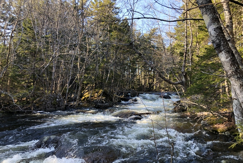 Pockwock Falls, located in Hammonds Plains, N.S., is an easy hike for families, and it's definitely worth the walk to see the falls, says Heather Fegan.
