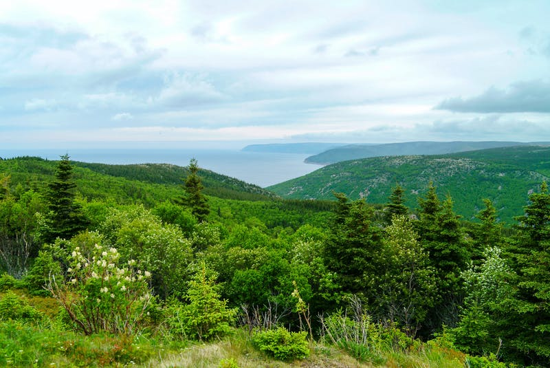 Acadian forest in Cape Breton. STOCK IMAGE