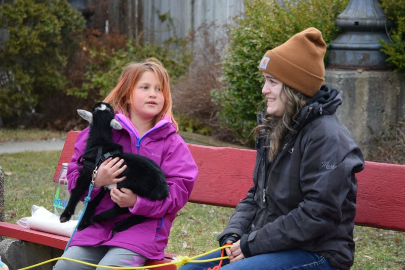 Katie Peacock fields questions from a young visitor holding one of the miniature goats at the downtown Shelburne visit on March 29. KATHY JOHNSON - Saltwire network