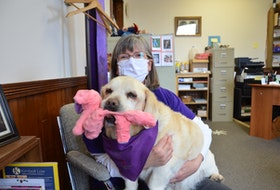 ElderDog Canada Kings County Pawd co-leader Nancy Armstrong with Mufasa, a 12-year old Golden Retriever and Pekingese mix she adopted through the organization. As always, he has his pink stuffed elephant toy with him. KIRK STARRATT