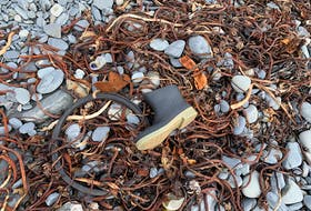 The tideline, where change is constant. — Russell Wangersky/SaltWire Network