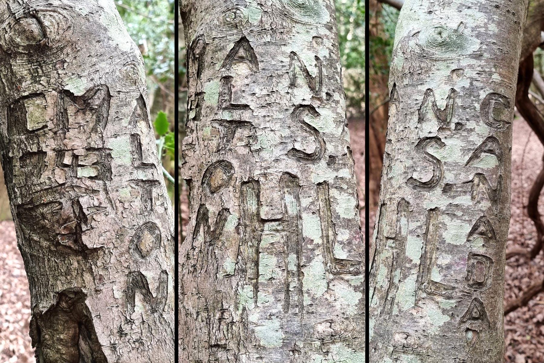 "Around the holly tree it says: ""ALTON, N.S., HL, CANADA, CM, 1943."""