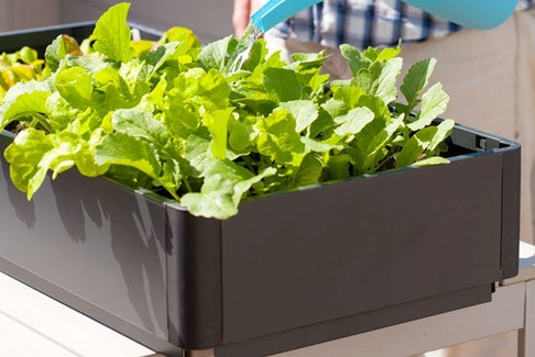 With new dwarf breeds being developed, any vegetable can be grown in a container.