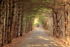 Peggy Theriault was out for a stroll on the Centennial Trail in Bridgewater, N.S. She said the tree branches above form a canape that feels almost like a tunnel when you walk through. It looks like you had a beautiful day. Thank you for the photo, Peggy.
