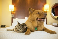 What happens if your pets outlive you? Christine Ibbotson breaks down your options.