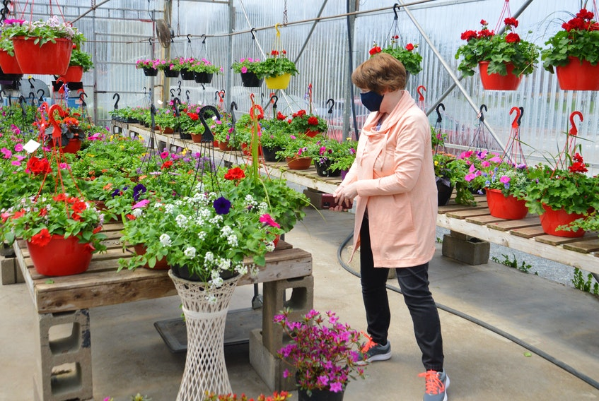 Mary O'Brien is spoiled for choice as she checks out the selection of pretty flowers at the Mabou Gardens centre on Grand Lake Road in Sydney near the Gardiner Road intersection. The Dominion woman was there on Mother's Day to pick up a few flowers. Given their connection to safe outdoor activities at home, garden centres are permitted to stay open during the current lockdown that only allows for retailers selling essential goods and services to remain open. DAVID JALA • CAPE BRETON POST
