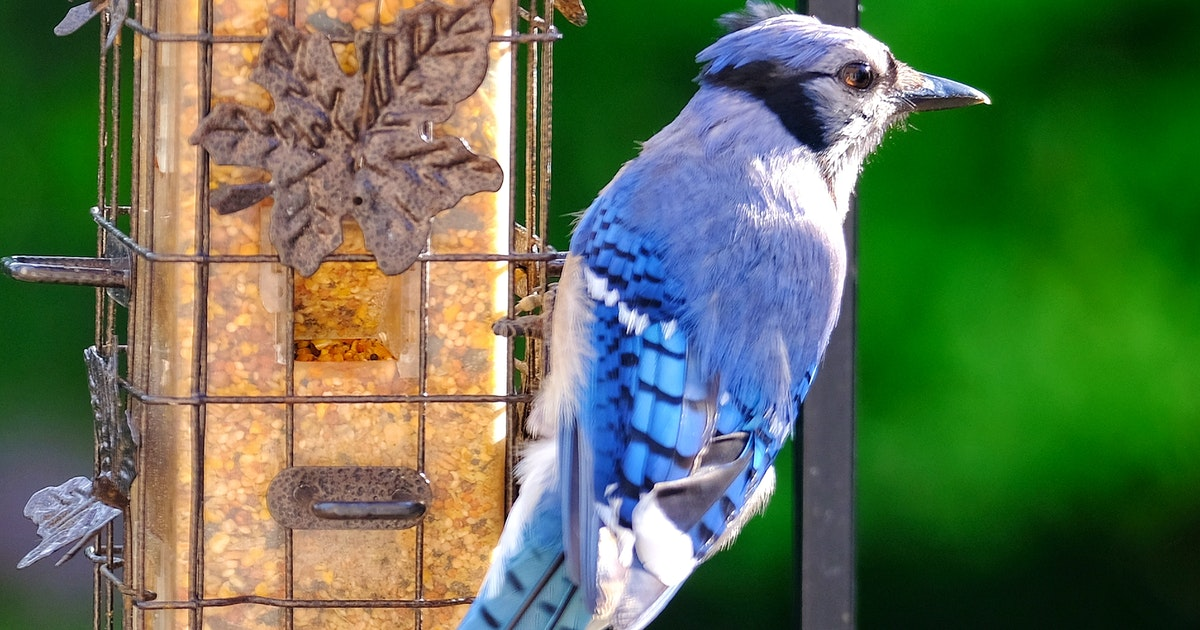 You could be hurting our feathered friends more than helping with backyard bird feeders, birdbaths and song recordings | Saltwire