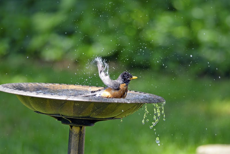 Birdbaths may look pretty, but because birds gather there, they become prime grounds for spreading disease among the bird population. - RF Stock