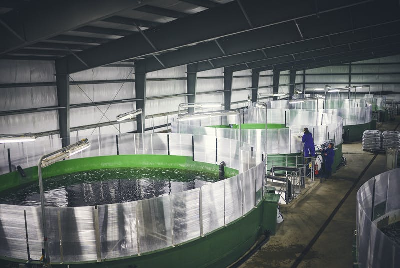 The business of aquaculture in Newfoundland and Labrador includes land-based hatcheries, like this salmon hatching facility in St. Alban's, and open net pens along the south coast. In addition to finfish aquaculture, the province also produces mussels. - Newfoundland Aquaculture Industry Alliance (NAIA)