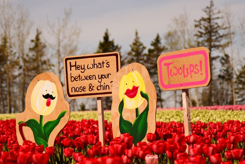 Great Enlightenment Buddhist Institute Society is almost ready to welcome visitors to their yearly tulip field. Submitted photo.