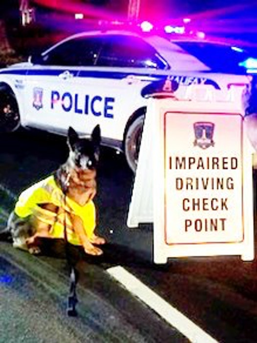 Halifax Regional Police brought in their dog Jynx in an effort to track the driver. - Twitter