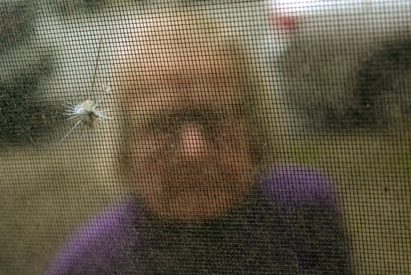 FOR PEDDLE STORY: Brenton Street resident, Maggie Grice looks at the shattered glass in a window of her Halifax home Wednesday May 12, 2021. Presumed to be from a pellet gun, she has been hit by pellets several times...a resident of the apartment building next door is presumed to be suspected. SEE STU STORY FOR DETAILS.