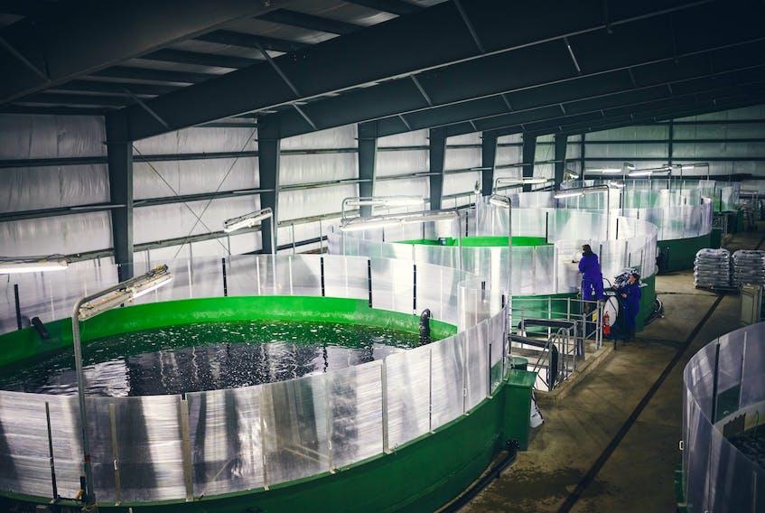 A salmon hatchery at St. Alban's. Photo courtesy Newfoundland Aquaculture Industry Alliance (NAIA)