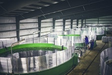A salmon hatchery at St. Alban's. Photo courtesy Newfoundland Aquaculture Industry Alliance (NAIA)