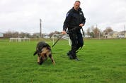 Cst Scott Milbury and MoJo have been doing a lot of training recently. The young German shepherd has been showing a natural skill for tracking. Lynn Curwin Photo