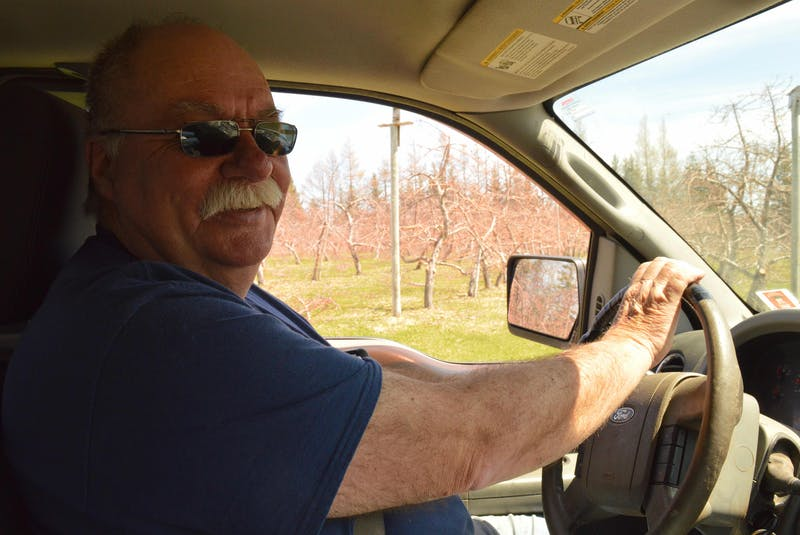 Barry Balsom drives past his stand of the first-ever Honeycrisp apple trees to be planted in Canada. The Honeycrisp variety thrives in the maritime climate. - Alison Jenkins