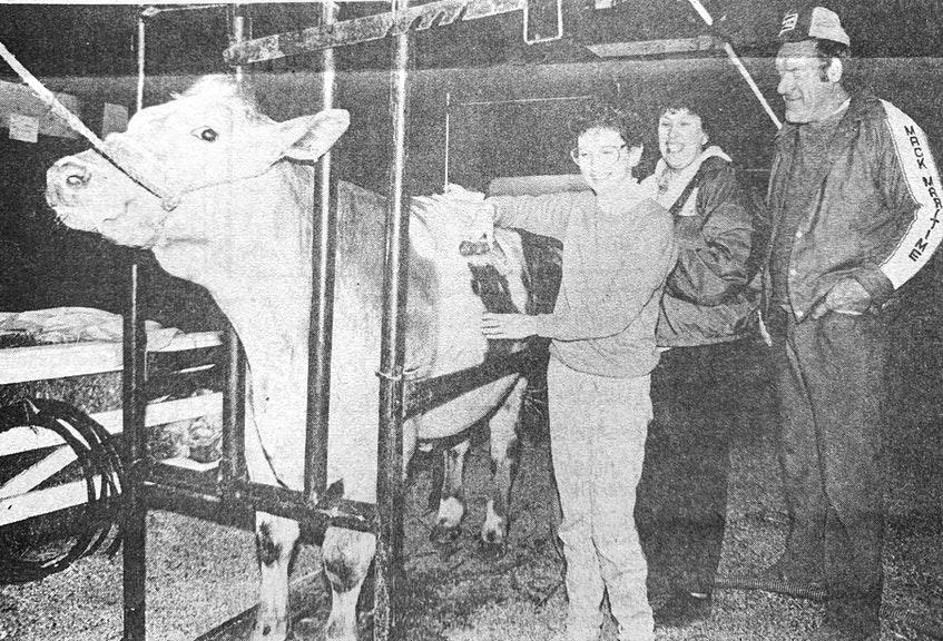 The 10th annual Nova Scotia Steer Show was held in Windsor in 1986. Pictured is Andrea Palmer, who was getting Alan Palmer's short horn/Charlois cross steer ready, and Joy Palmer, the show's stenographer, and Bruce Spence, the Nova Scotia Steer Show president. - File Photo