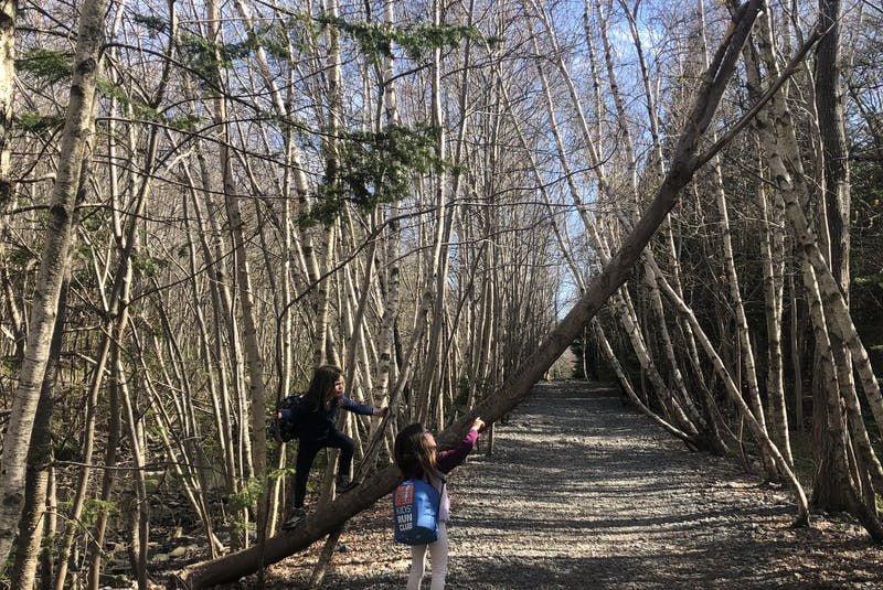The Pipeline Loop at Long Lake Provincial Park features a wide variety of terrain. You may want to plan your trip during a dry spell, or else your hike may be quite wet and muddy, says Heather Fegan. - Heather Fegan