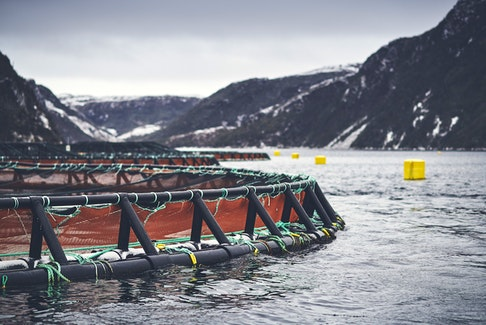 A salmon farm site on the Connaigre Peninsula on Newfoundland's south coast.