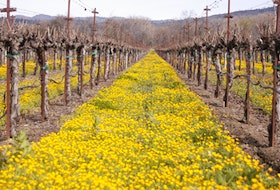 The California wine industry is a leader in the sustainable wine movement. Photo: California Wines