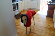 """Pet owners don't dress up their dogs just to make them look cute - many do so for practical reasons. """"If you have a pet that doesn't have much fur for protection, they needed warmth in the wintertime,"""" says Margaret Wedge, owner of Island Petware in Borden-Carleton, PEI."""