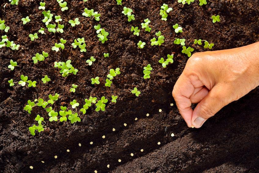 Cape Breton gardeners are preparing to plant seeds. STOCK IMAGE - Saltwire network