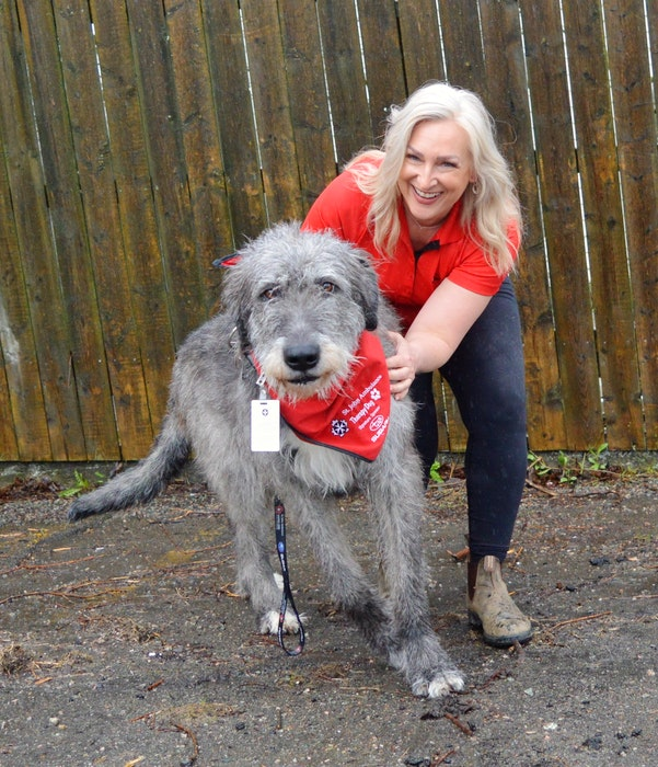 Olaf might weigh 160 pounds, but the Irish wolfhound — and certified support dog — is a gentle giant with a soft spot for seniors and children, says owner Tracie Breski. Chris Connors/Cape Breton Post - Christopher Connors