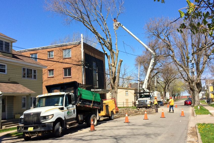 It's that time of year again when the trees lining so many of Sydney's streets require a little trim or removal such as this one being tidied up on north Charlotte Street on Monday. CAPE BRETON POST