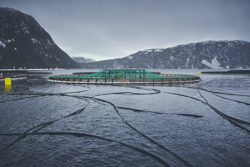 The salmon aquaculture industry in Newfoundland and Labrador currently uses open-net pens in the ocean to grow salmon to market size.  - Contributed photo