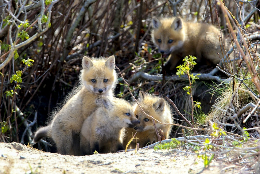 FOR NEWS STANDALONE: