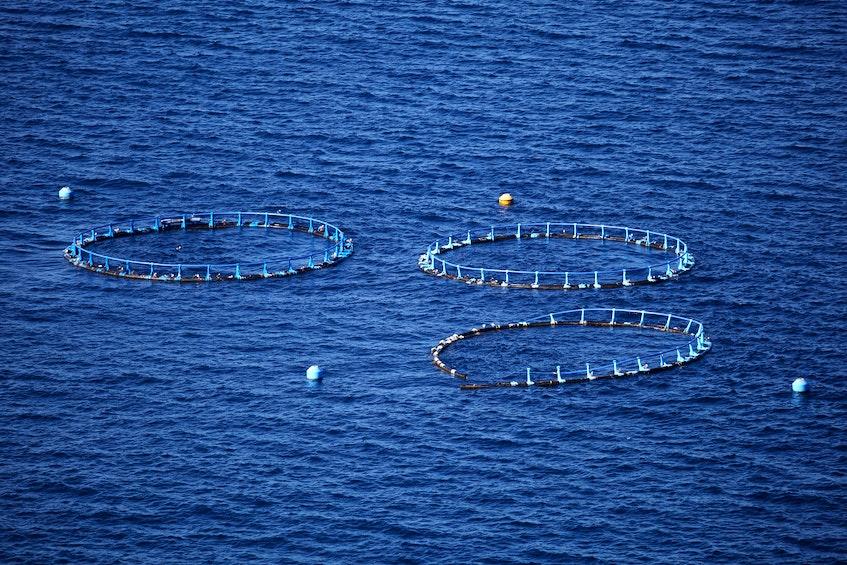 Marine open water fish farm. - 123RF Stock Photo