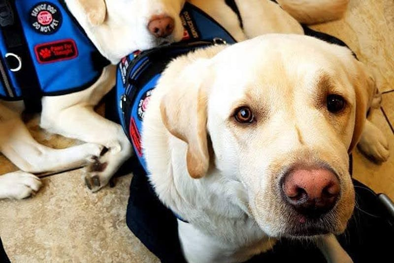 Thai and Cinco, a pair of Paws Fur Thought service dogs matched with military veterans and first responders suffering from PTSD. -- Paws Fur Thought - Contributed