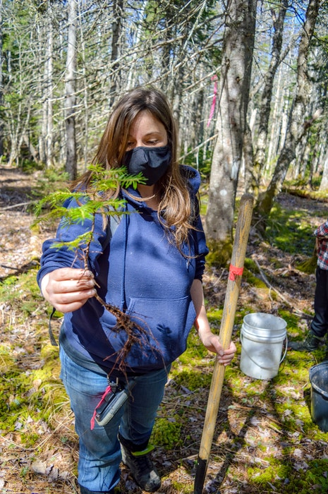 Jen Cooper, ACAP Cape Breton project manager and associate executive, holds up a balsam fir for replanting. JESSICA SMITH/CAPE BRETON POST