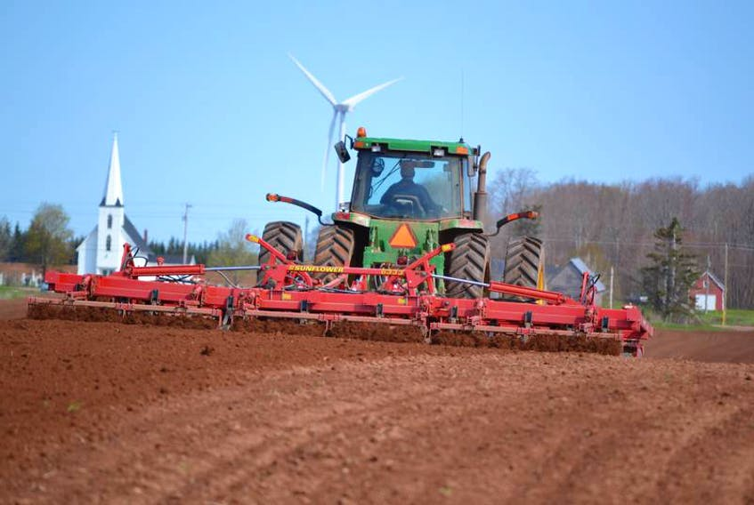 A farmer guides a set of harrows through a field being prepared for potato planting.