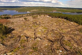A large clearcut on public land in the Ingraham River area, north of St. Margarets Bay, in April 2017. - Raymond Plourde