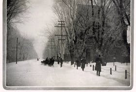 Elm trees once lined many Truro streets, including the ones depicted in these old photos that were once found on Prince Street, before Dutch Elm Disease arrived.