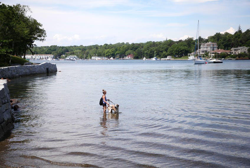 Margaret (no last name given) wades into the waters of the Northwest Arm with her dog, Oliver, as they seek some relief from the mugginess on Monday afternoon, July 13, 2020.