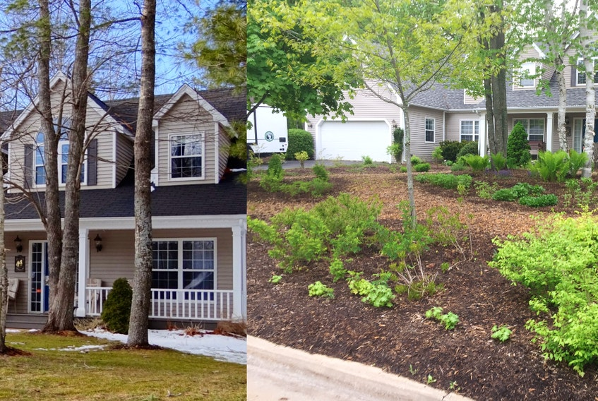 Before and after photos of the Helping Nature Heal team's work at Marda and Ralph Hirschfield's Kentville property, where they transformed both front and back yards. - Photo Courtesy Marda and Ralph Hirschfield.