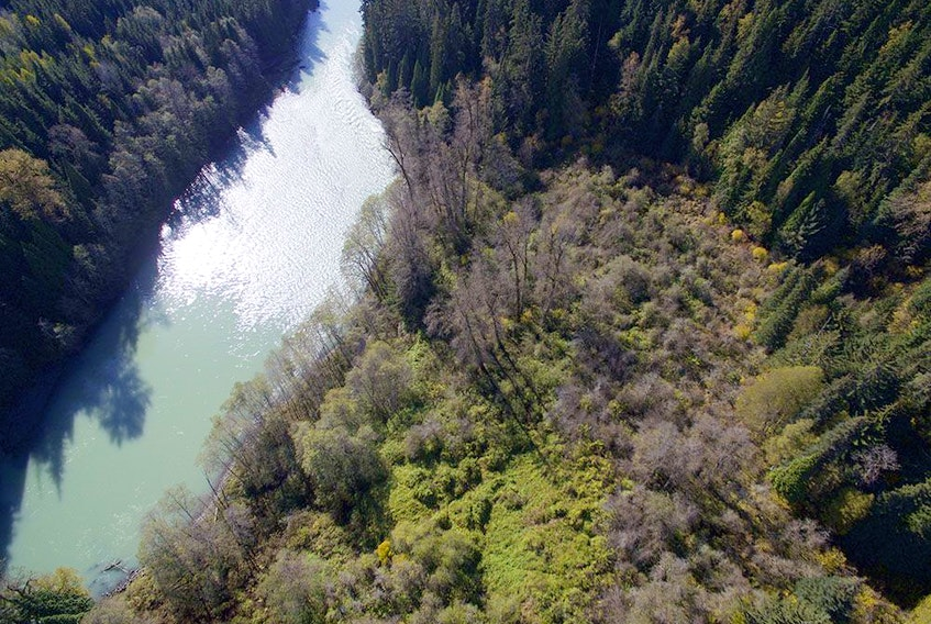 The Ts'msyen forest garden in northwestern B.C. is part of a groundbreaking new study by Simon Fraser University.