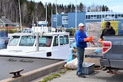 Preparing bait, Brent MacEachern (left) and Nathan Gormley help to get Miss Amelia ready for setting day, off Caribou Wharf.