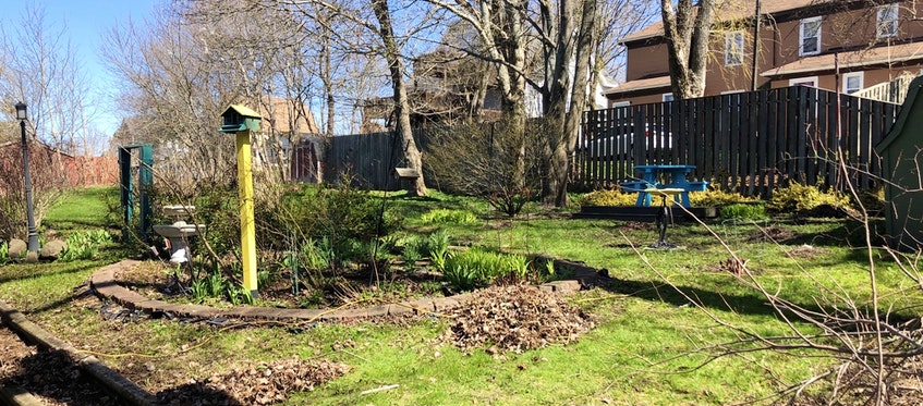 In a few weeks, the backyard at Greg MacLeod House will be full of luscious green leaves and bright flowers, a place for reflection and meditation for the six Christian Cape Breton University student who will be chosen to live there. NICOLE SULLIVAN/CAPE BRETON POST  - Nicole Sullivan