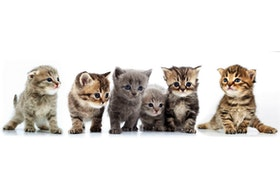 The P.E.I. Humane Society (PEIHS) has launched its annual virtual kitten shower and donation drive from May 3-14.