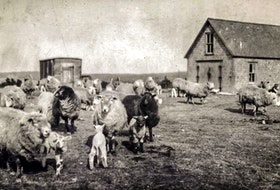 A farm in Donkin, circa 1920. There has been a decline in the number of farms nationwide in Canada from 1921 onwards. CONTRIBUTED • BEATON INSTITUTE