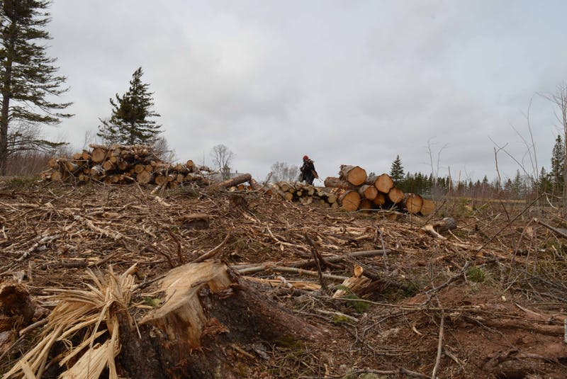 Georgina Markov passes some of the logs harvested from Green Park last fall. - Alison Jenkins