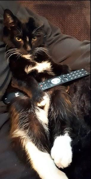 """Lorraine Seward-Smith sent this adorable photo of her cat Doodie getting ready to watch a little television after a workout he just had; he turns 18 this fall in Lower Sackville, N.S. She said his """"huge"""" personality keeps her and her husband entertained.   Thank you for sharing, Lorraine."""
