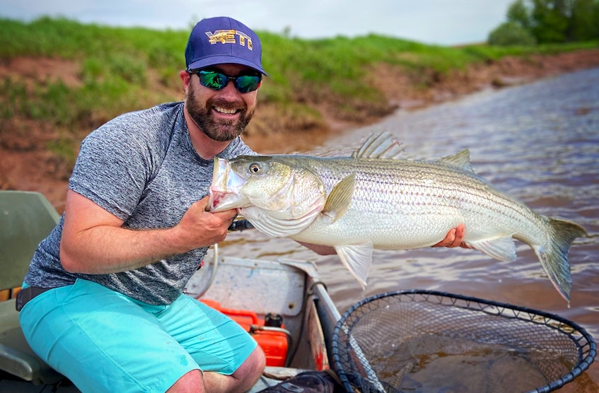 Matt Dort had a great day on the Stewiacke River on June 5, as he landed this huge striped bass. Contributed by Matt Dort - Contributed