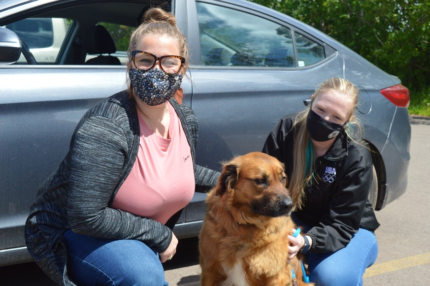 The P.E.I. Humane Society is once again reminding people not to leave their animals in hot cars this summer. Helping to increase awareness of the issue is Ashley MacLeod, left, development and communications co-ordinator with the society; Sam Wojack, a clicker trainer with the Atlantic Veterinary College; and Charlie, a five-year-old German shepherd mix who is up for adoption. - Dave Stewart