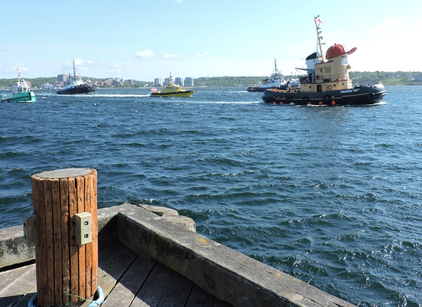 Theodore TOO leads a flotilla of working Halifax Harbour craft on one last sail past before hitting the open sea for his new home in Hamilton. - Stephen Cooke