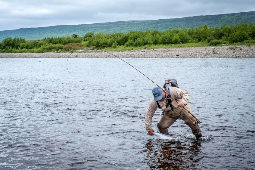 An angler makes a play for salmon on the Codoy River in Newfoundland. —  File photo