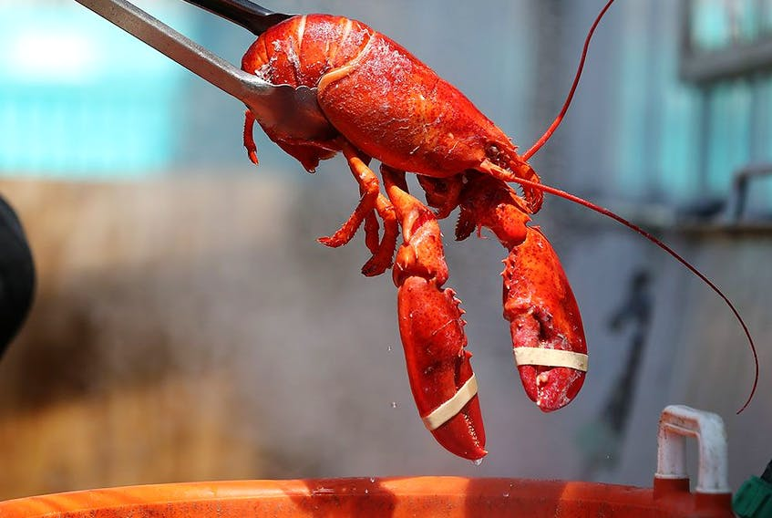 In a preliminary study, scientists set out to find out whether or not exposing lobsters to cannabis smoke would ease their deaths.